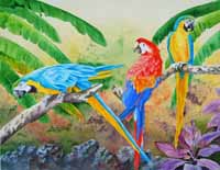 Three Macaws
